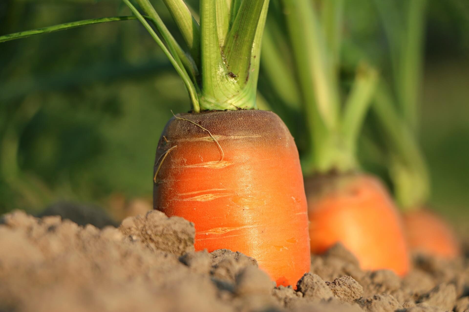%name carrot