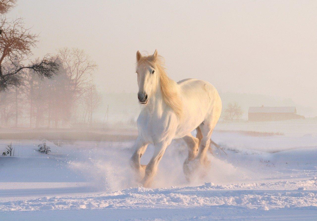 %name white horse